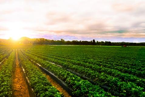 Day & Zimmermann Bayer Crop Sciences